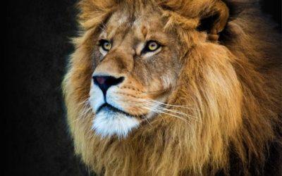 A hónap meséje - A királyfi, aki nem ismerte a félelmet